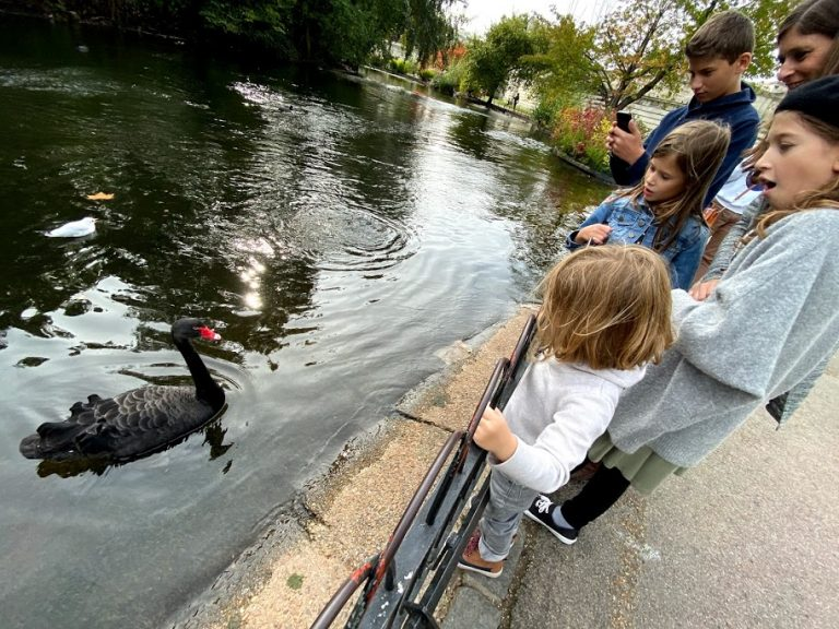 Kids looking at bird in St James Park