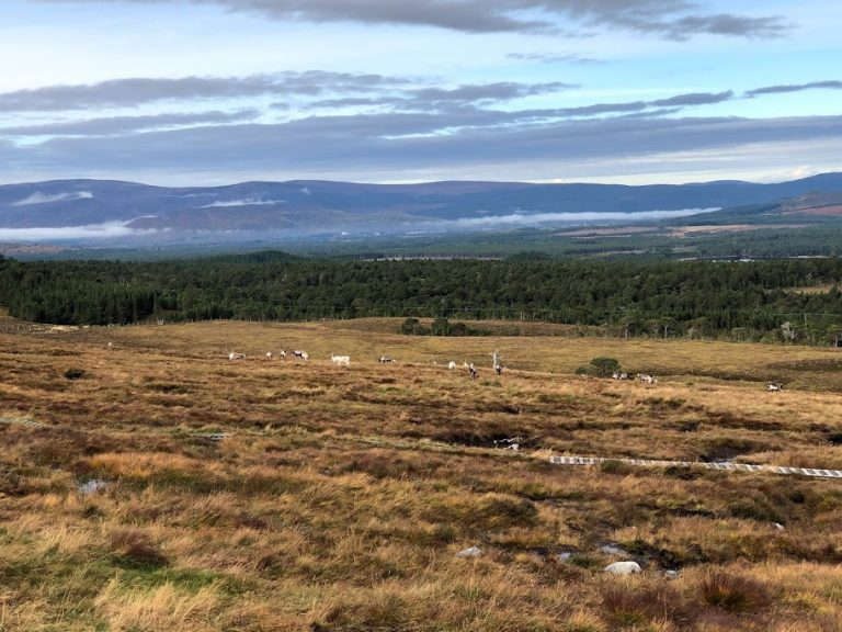 Cairngorm National Park Reindeer Herd