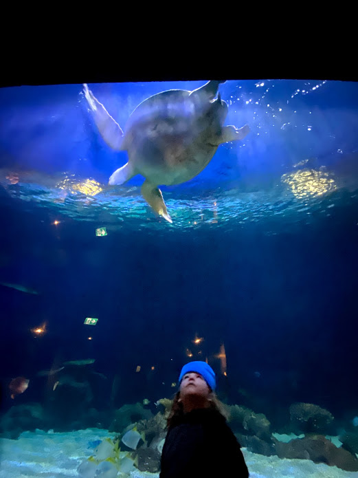 Vancouver with Kids - Aquarium