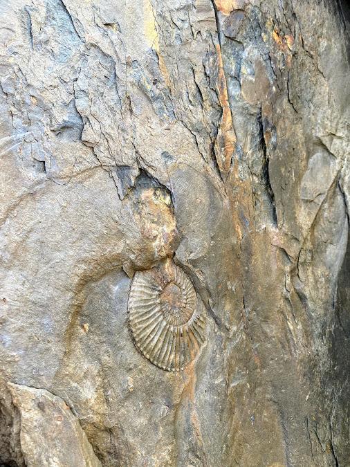 Marine Fossil in Estancia Cristina