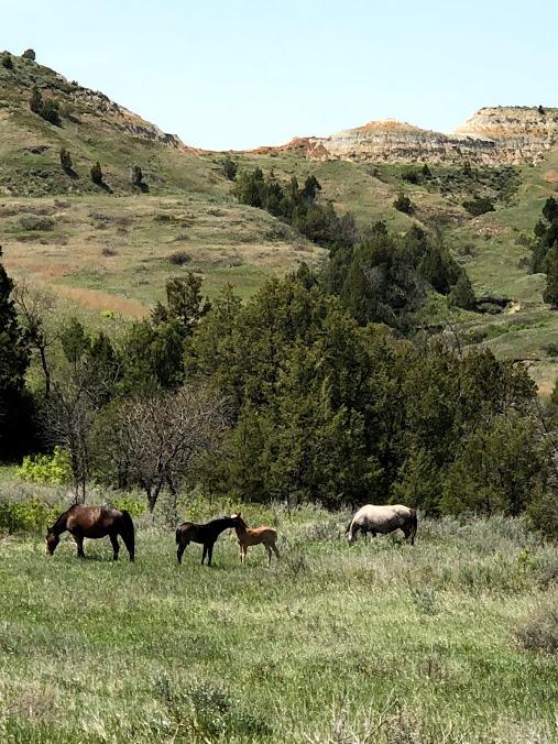 Wild West Horses